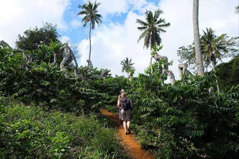 Voyage à pied : Rando Ylang-Ylang !