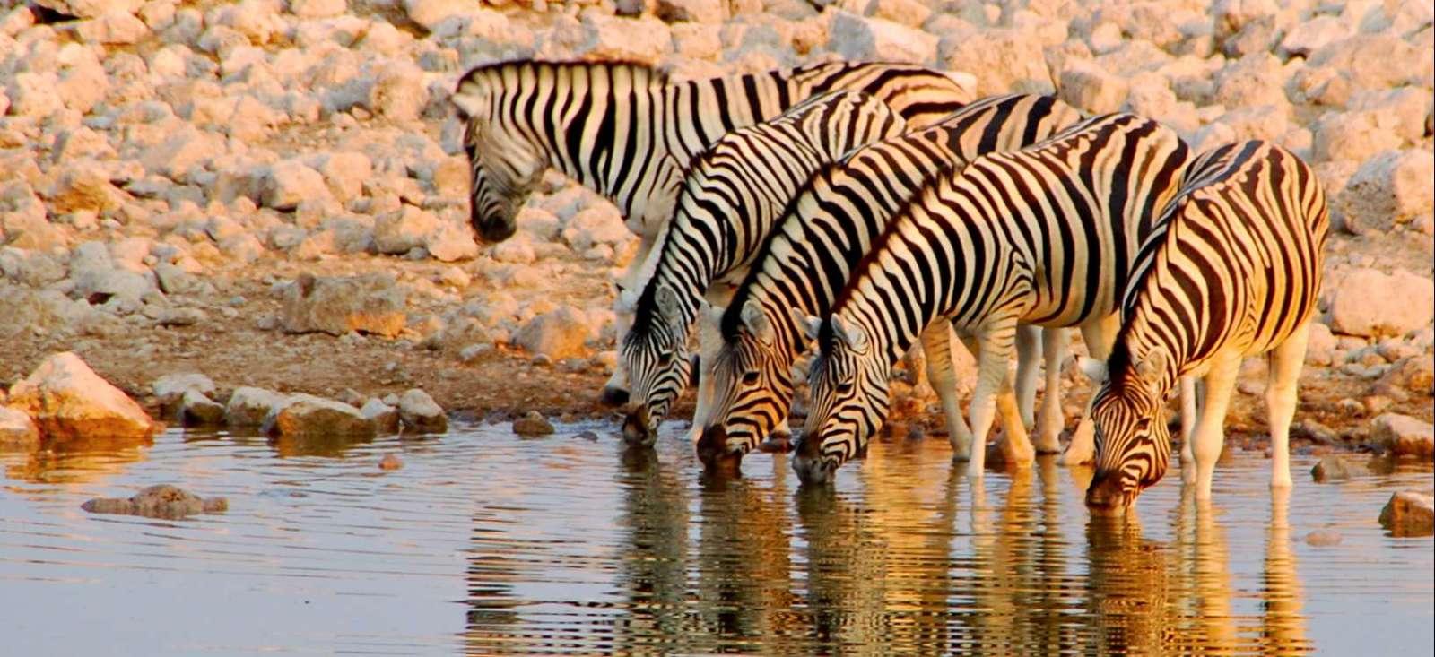 Voyage avec des animaux : Namibie : Désert du Namib et faune d\'Etosha !