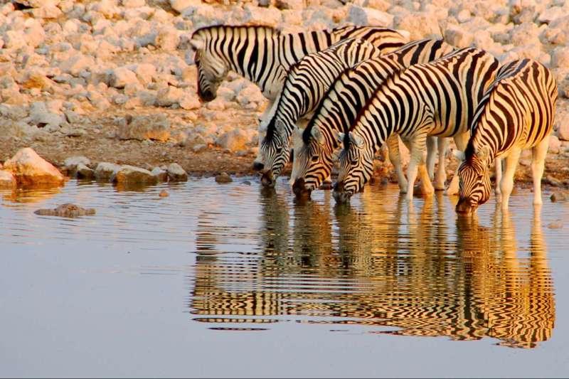 Voyage à pied : Désert du Namib et faune d\'Etosha !