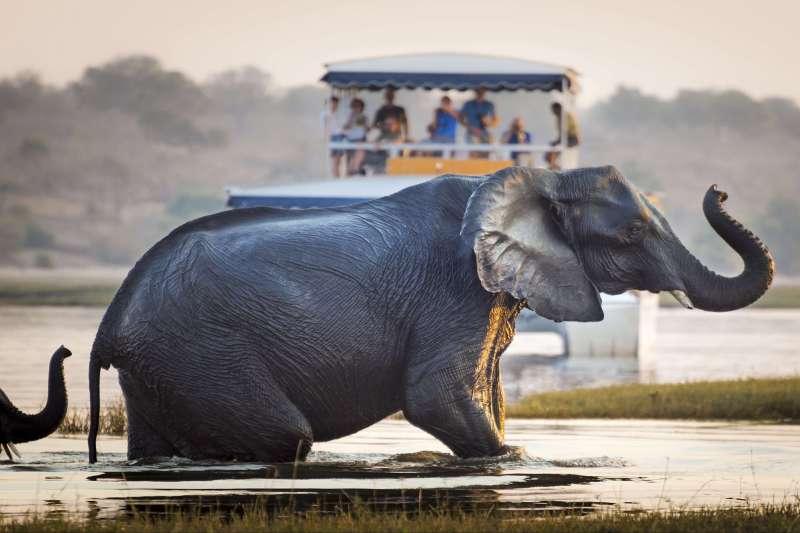 Voyage avec des animaux : Trio magique de l\'Afrique australe