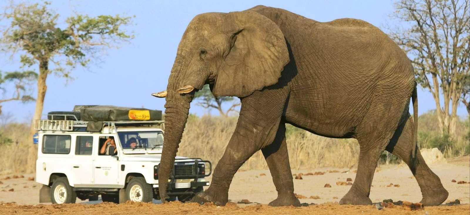 Voyage à pied : Trio magique de l\'Afrique australe