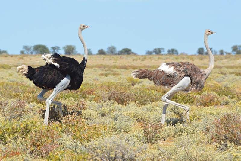 Voyage à pied : BushTrip de Windhoek au Cap