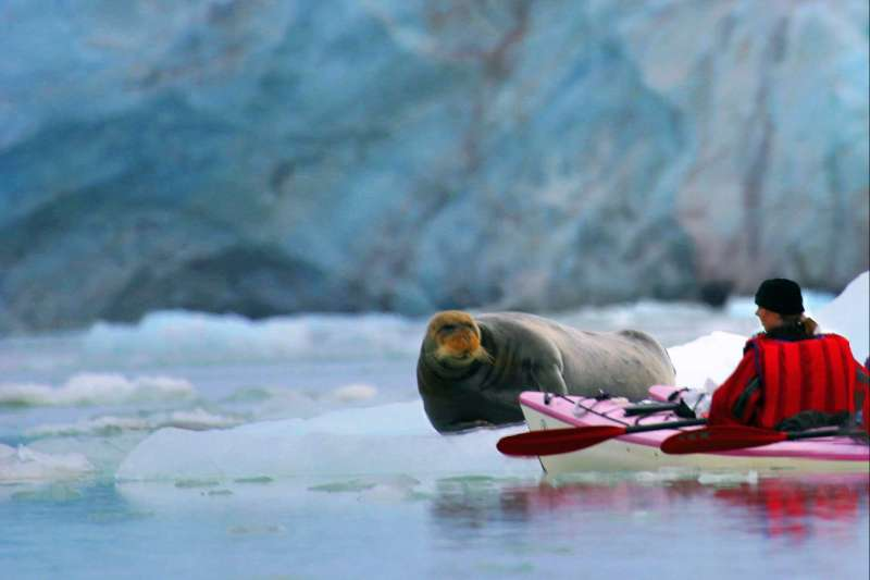 Image Le Spitzberg en kayak et en rando !
