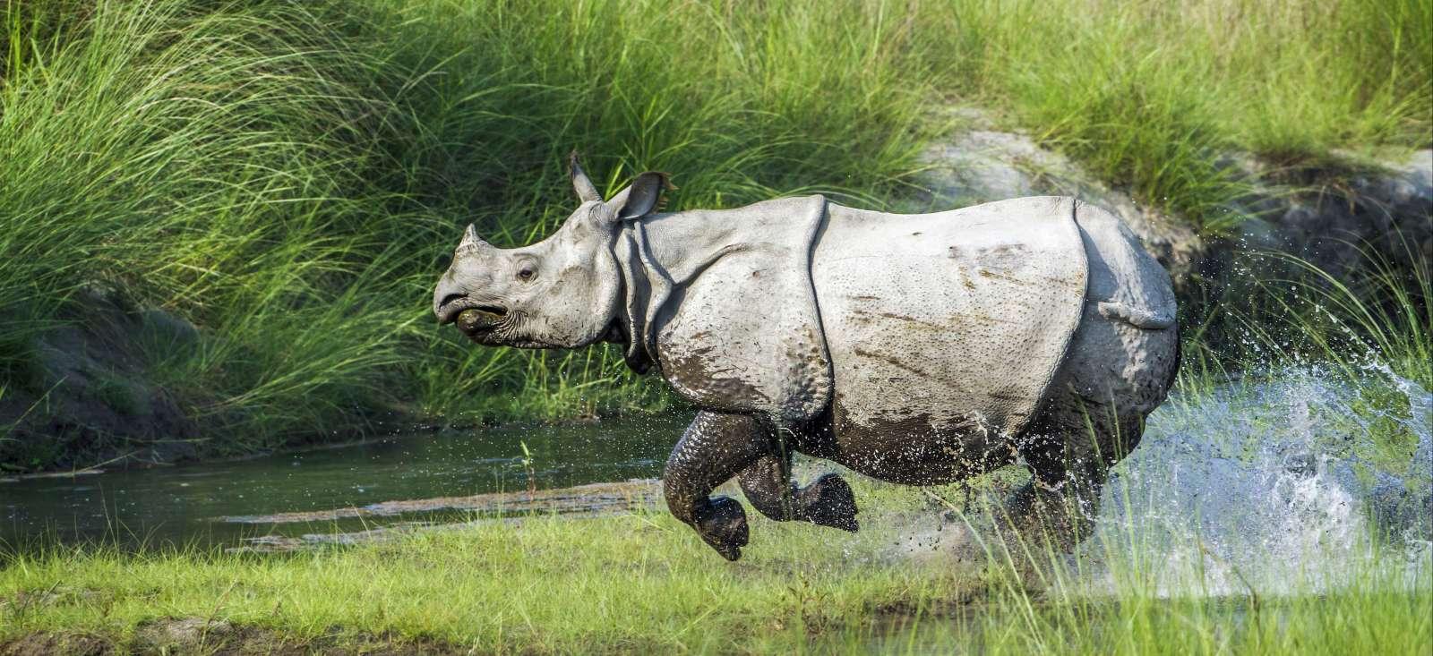 Voyage avec des animaux : Villages du N\'pal & safari du Chitwan