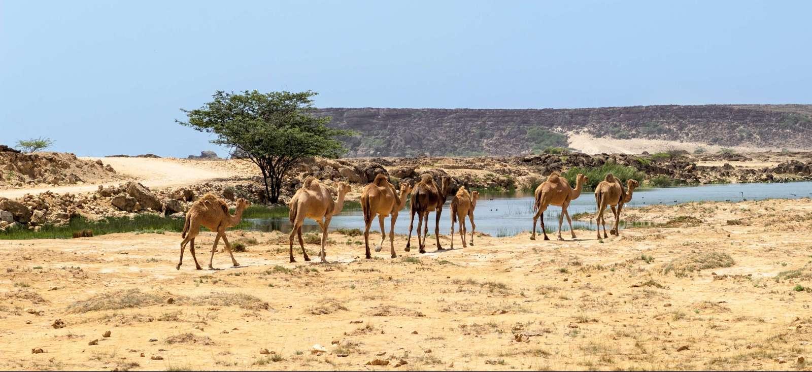 Voyage à pied : Désert de Rub Al Khali et Dhofar (Sud Oman)