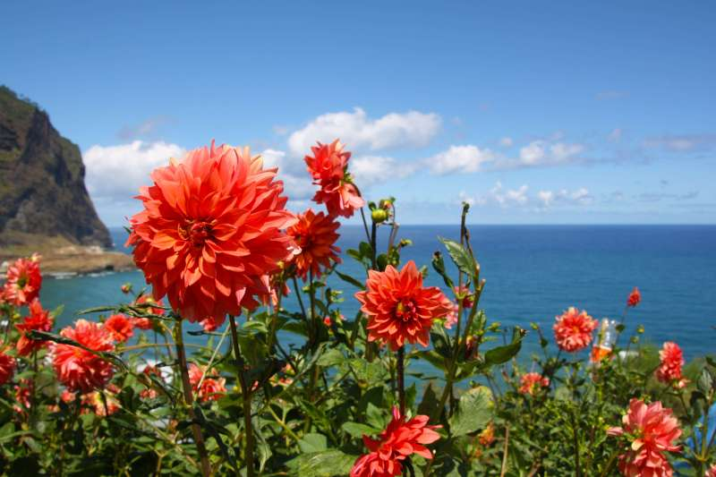 Voyage à pied : Fleurs et levadas