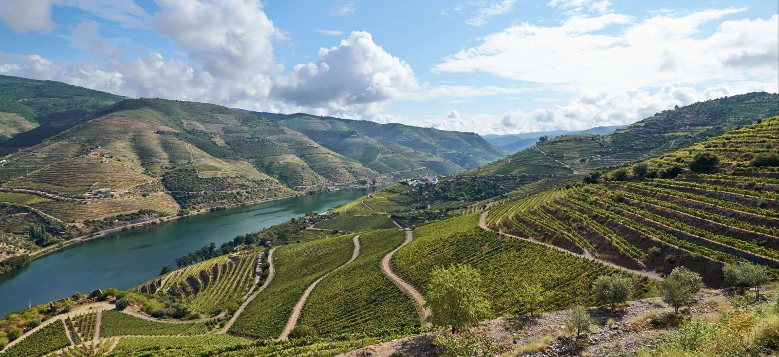Voyage à pied : Porto et les secrets du Douro
