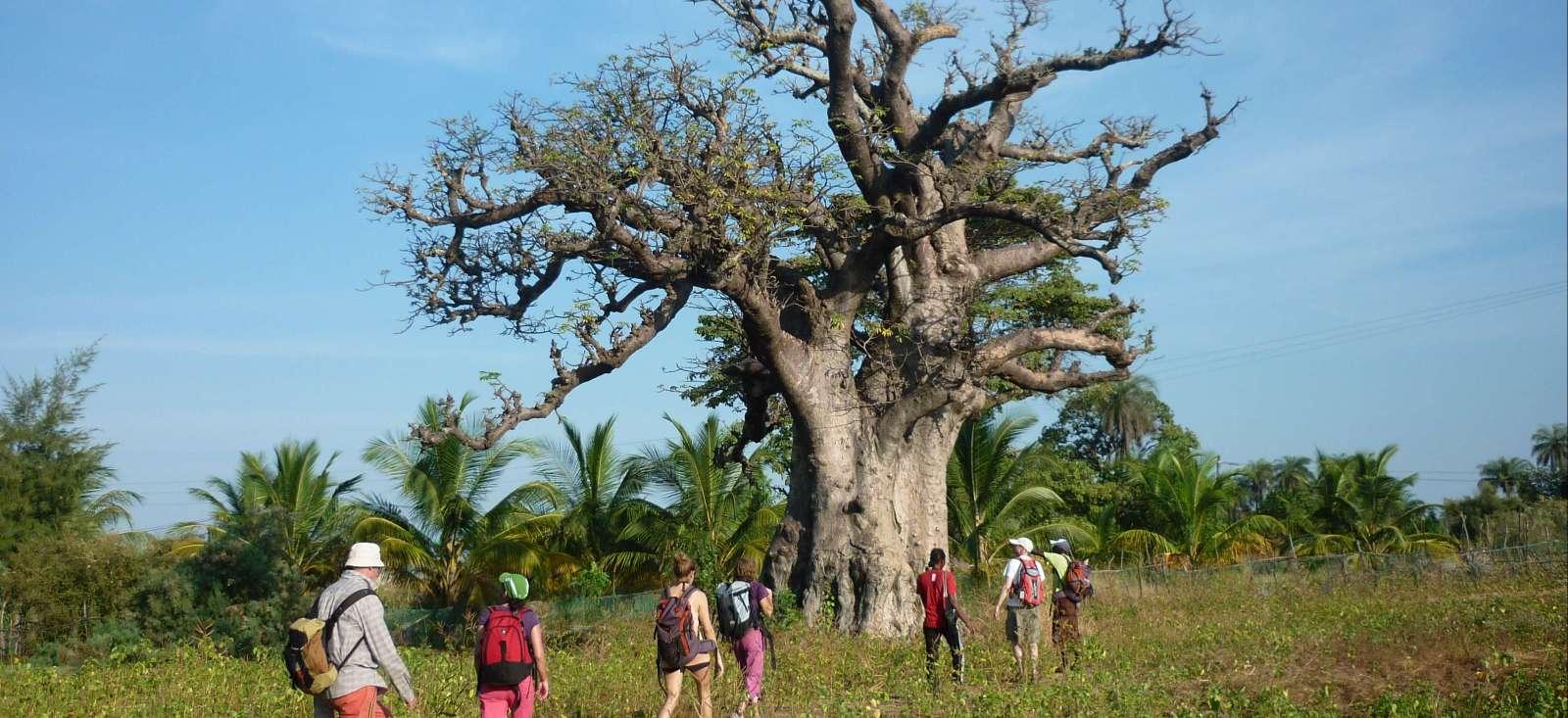 Voyage à pied : Au royaume des Baobabs Sacrés