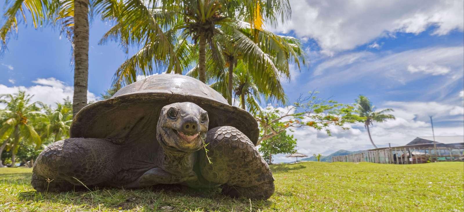 Voyage à thème : Le meilleur des Seychelles en Famille !