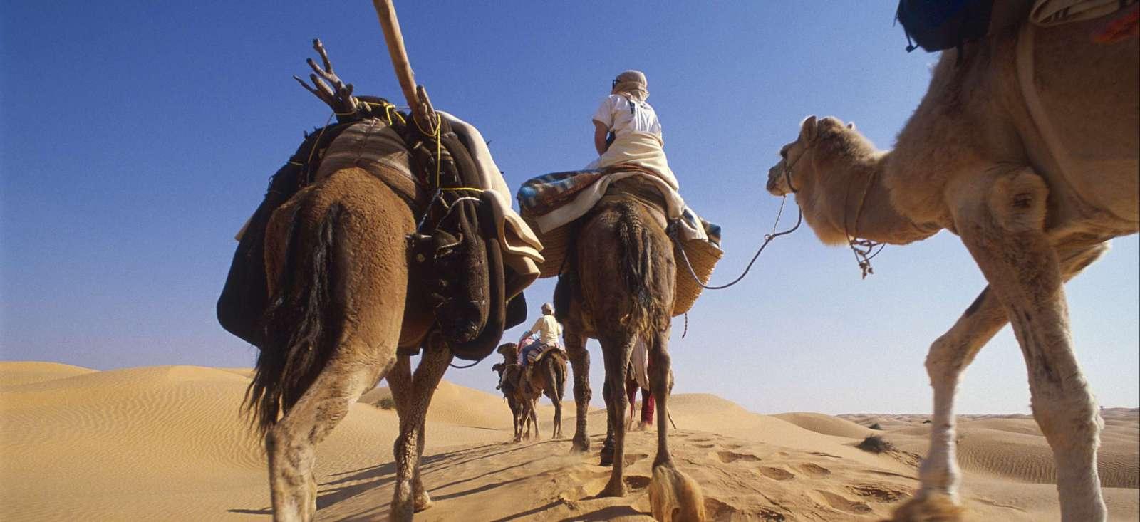 Voyage à pied : Tunisie : Sables, roses et oasis !