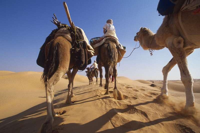 Voyage avec des animaux : Tunisie : Sables, roses et oasis !