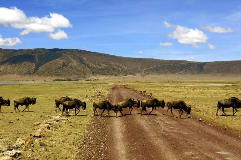 Voyage avec des animaux : Jambo Tanzania !