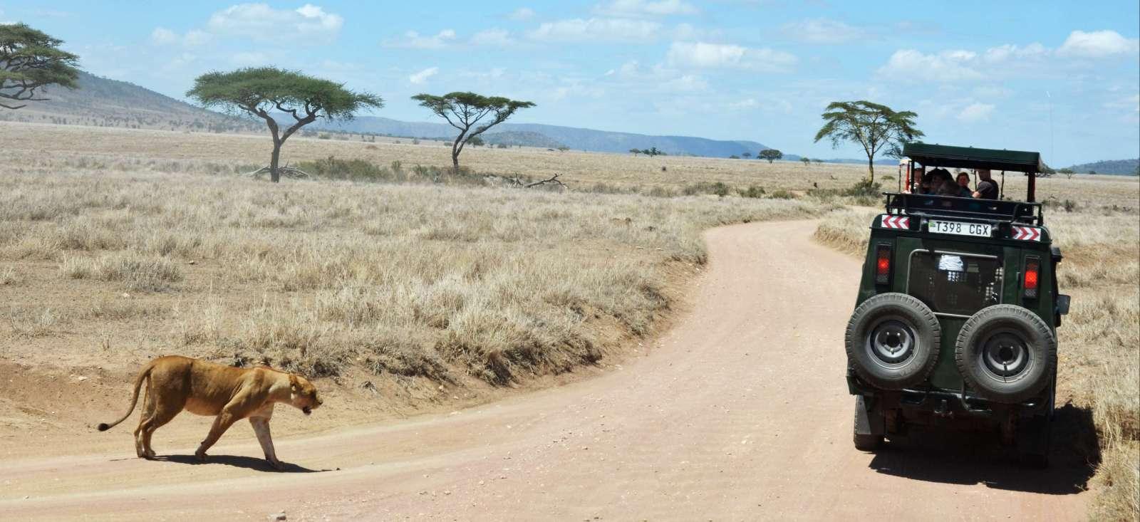 Voyage avec des animaux : Les grands safaris de Tanzanie