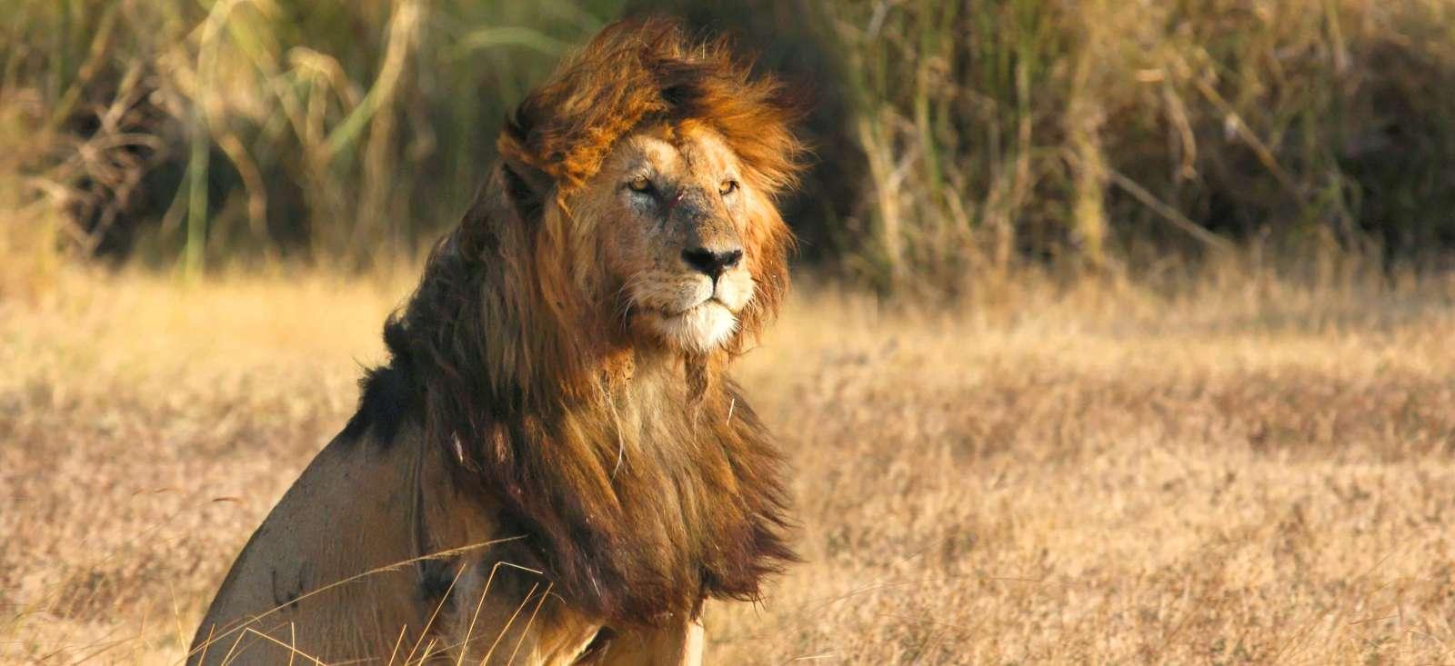 Voyage à pied : Safari des grands parcs