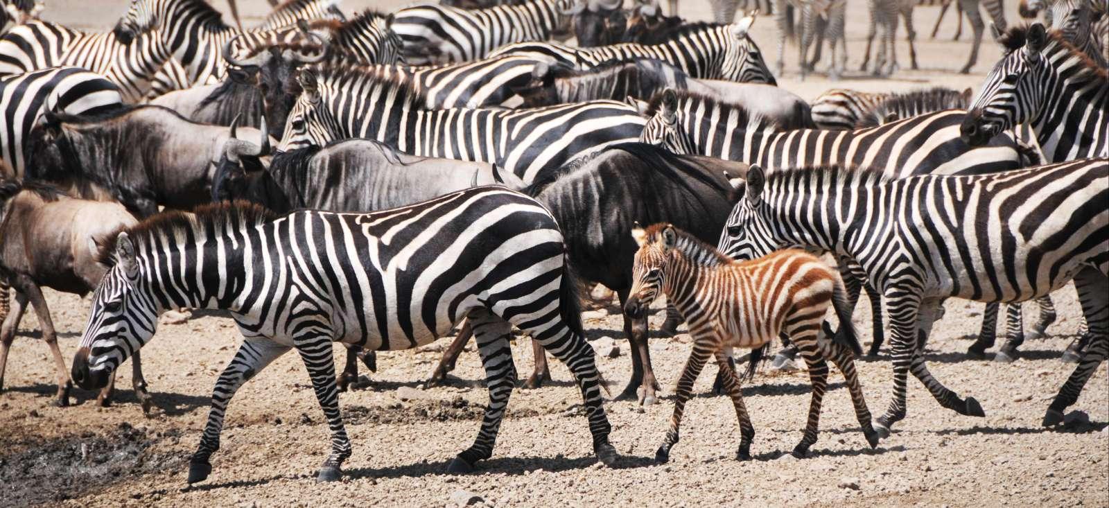Voyage à pied : Tanzanie : Jambo Tanzania & Zanzibar !