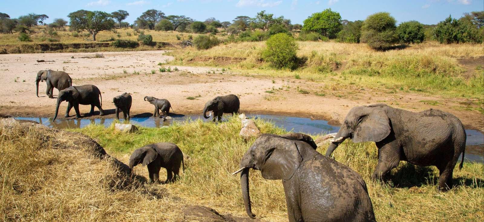Voyage à pied : Jambo Tanzania !