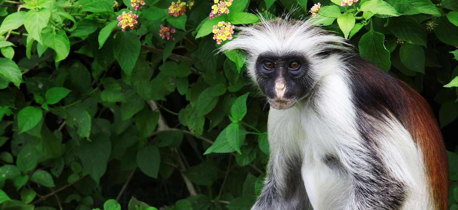 Voyage à pied : Zanzibar, épicez tout !