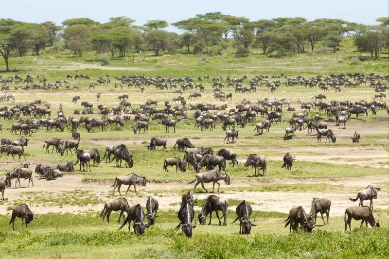 Voyage avec des animaux : La Migration, c\'est le Gnou du spectacle !