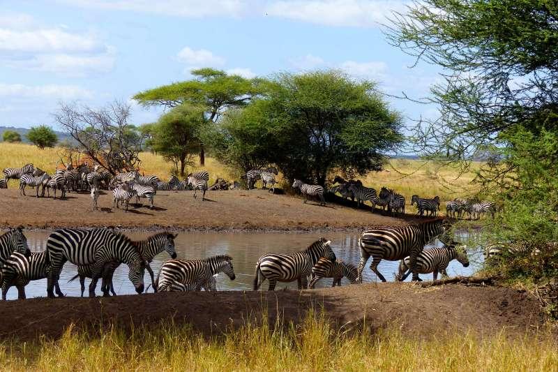 Voyage en véhicule : Au volant de mon 4x4 en Tanzanie !