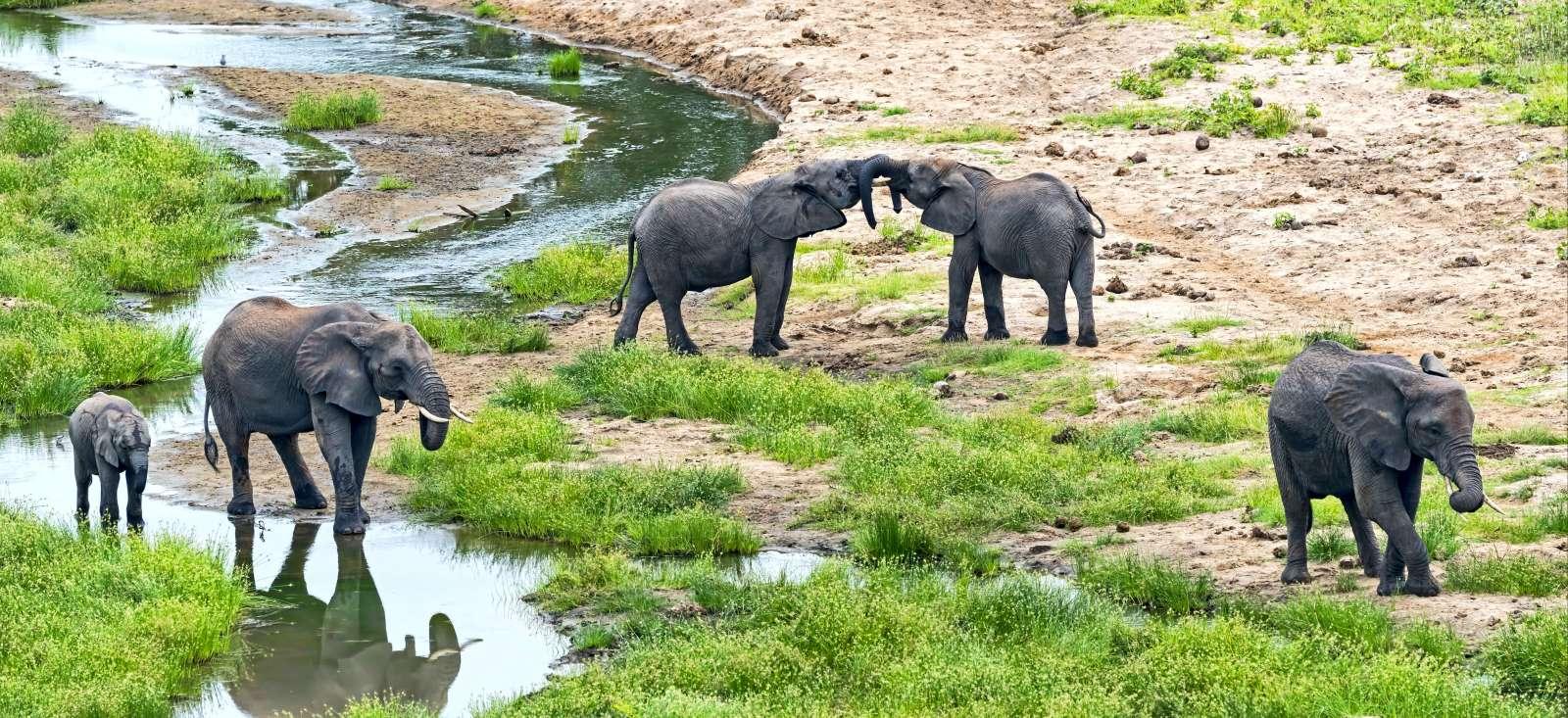 Voyage à pied : Safari & plages de Zanzibar en famille
