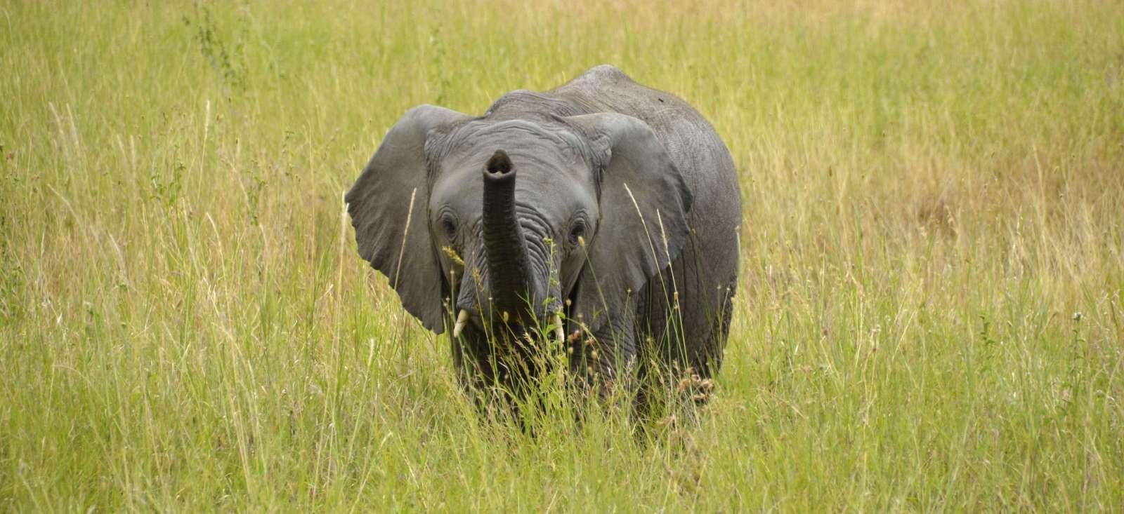 Voyage à pied : Envie de migrer ? Rejoignez-gnous en Tanzanie !