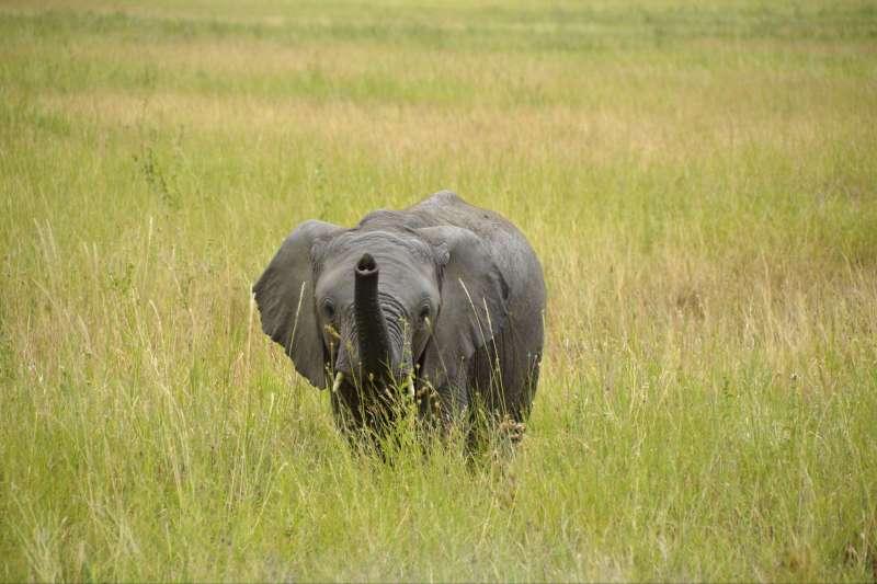 Voyage en véhicule : Au bout des pistes.... le Serengeti