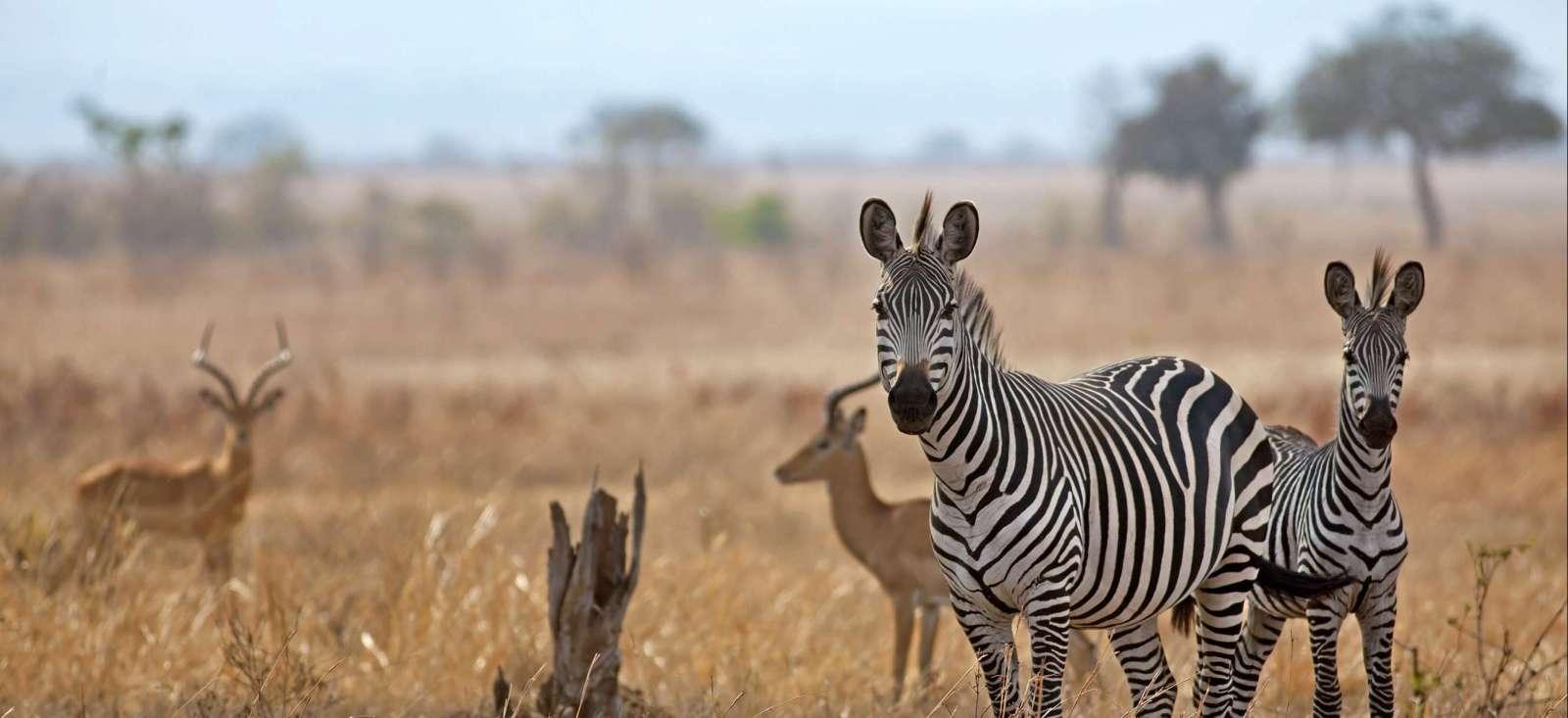 Voyage en véhicule : Safari dans les plus beaux Parcs du Sud
