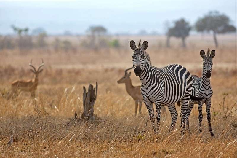 Voyage avec des animaux : Safari dans les plus beaux Parcs du Sud