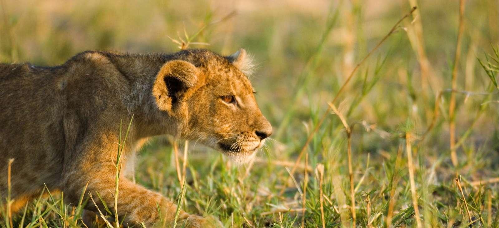 Voyage à pied : Katavi & Ruaha, la Tanzanie sauvage