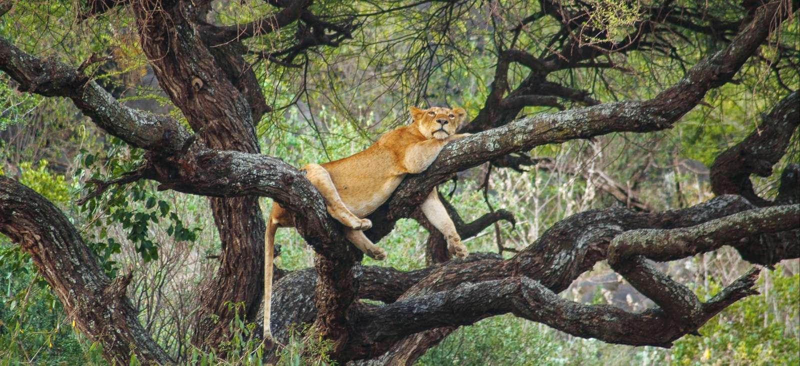 Voyage à pied : Safari grandeur nature en lodge...