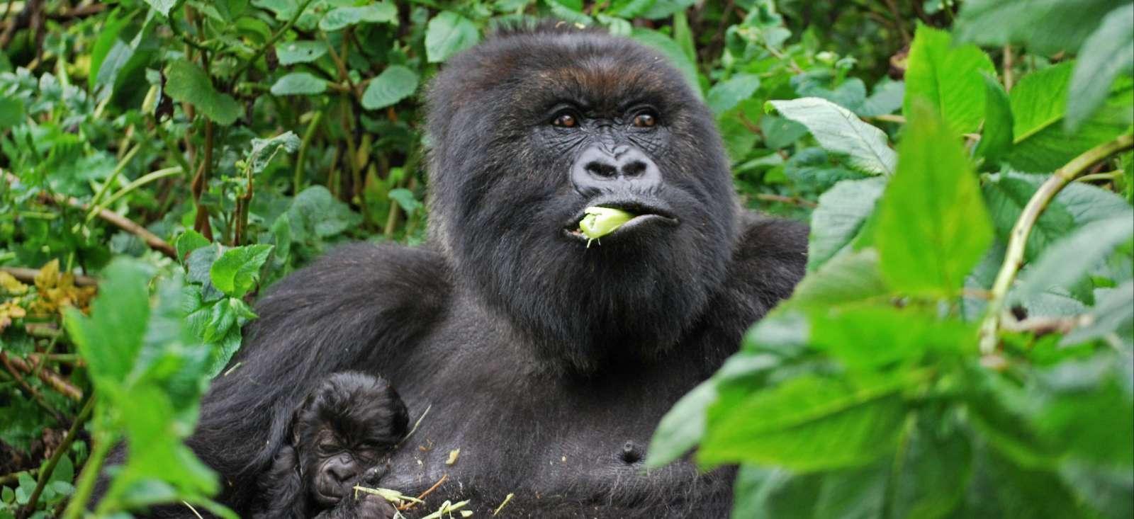 Voyage à pied Ouganda : Gorilles et merveilles de l\'Ouganda