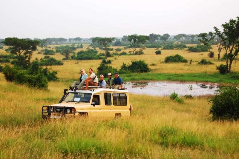 Voyage avec des animaux : Les sites incontournables de l\'Ouganda