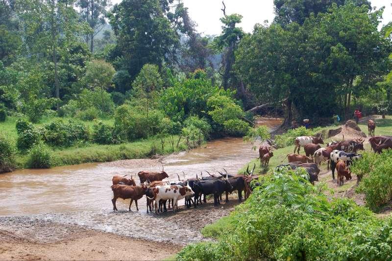 Voyage à pied : Aventure équatoriale en Ouganda