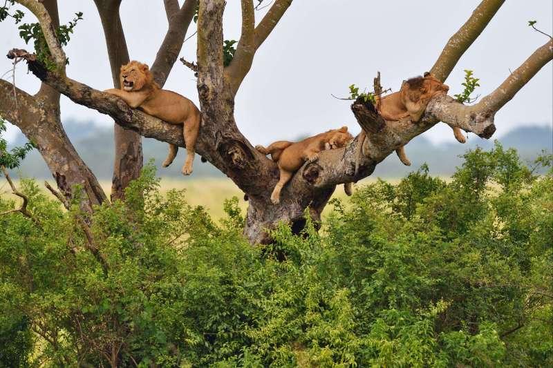 Voyage à pied : L\'Ouganda du Nord au Sud
