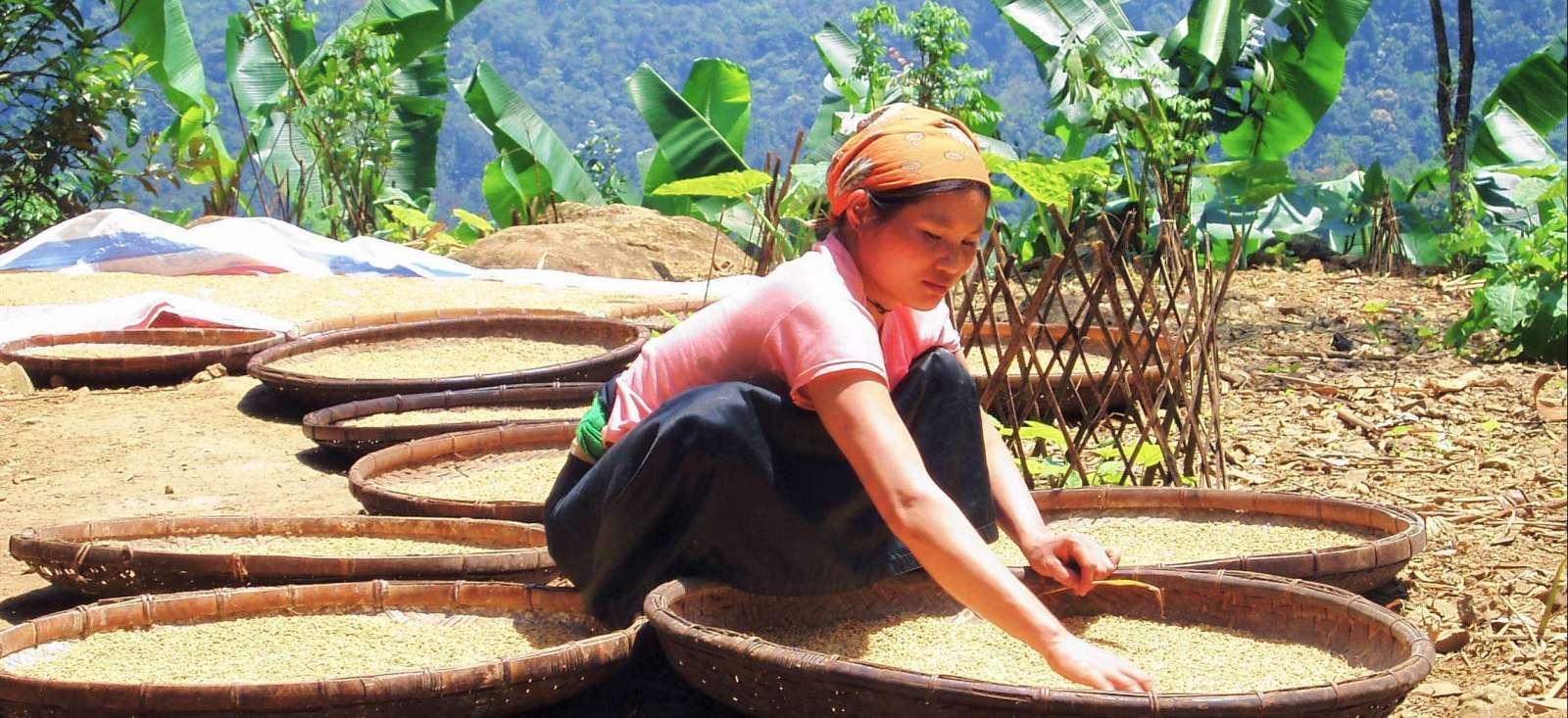 Voyage à pied : Vietnam : Randonnée tonkinoise et pagode de l\'Annam