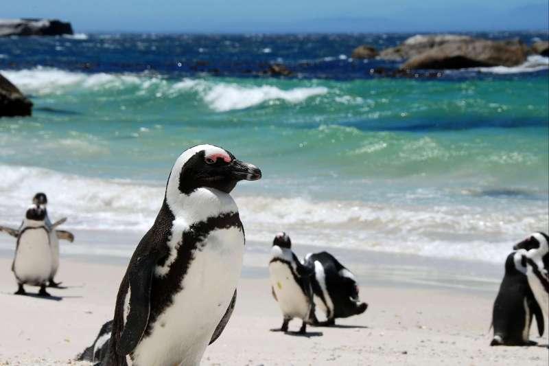 Voyage avec des animaux : Cap au sud en famille!