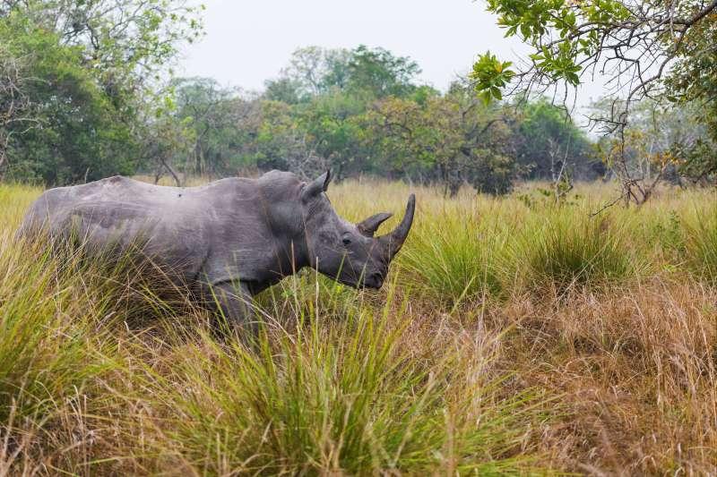 Voyage avec des animaux : Zambie d\'ailleurs...