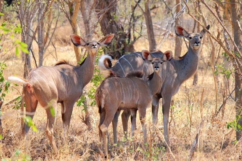 Voyage avec des animaux : Safari au cœur de l\'ancienne Rhodésie