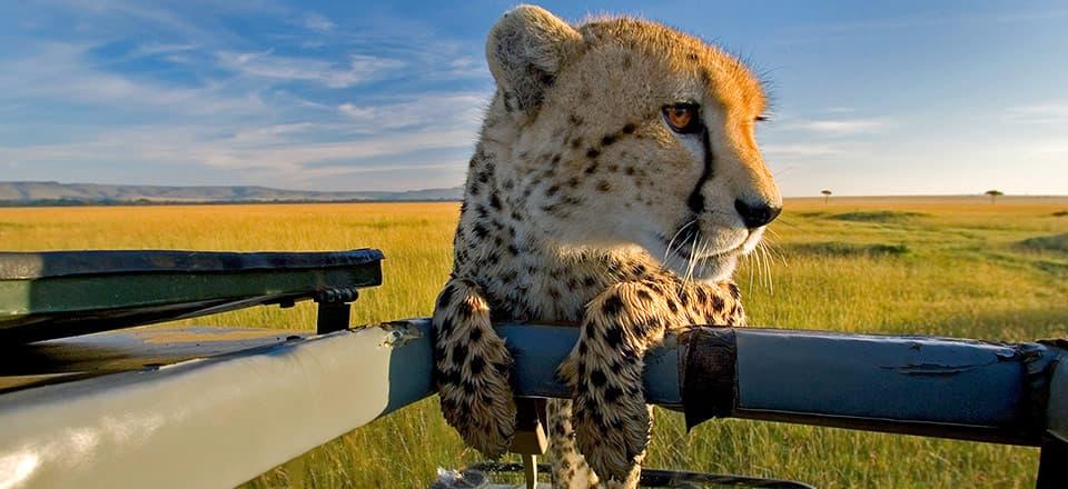 voyage safari photo afrique